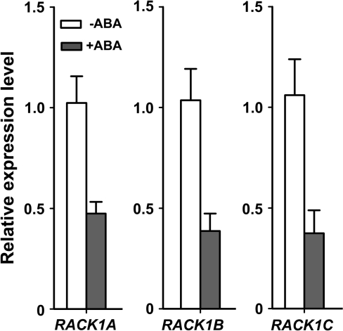 Regulation of the transcription of RACK1 by ABA. The transcript levels of RACK1 genes in wild-type (Col) with ABA treatment (10 μM for 2 h), compared with no ABA treatment, were analysed by quantitative RT-PCR. The expression of ACTIN2 was used as control. Each RACK1 gene was normalized against Col without ABA treatment, with the value of the first biological replicate set as 1. Shown are the mean values of three biological replicates ±SE.