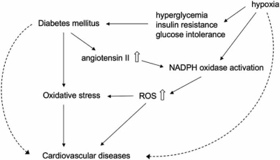 Role of oxidative stress in the progression of cardiovascular diseases accompanied by diabetes mellitus. Diabetes mellitus induced oxidative stress at least partly through NADPH oxidase activation, and consequently accelerated the progression of cardiovascular diseases. In addition, hypoxia might be implicated in the development of diabetes mellitus and production of reactive oxygen species (ROS), associated with the insult to mitochondria in cardiomyocytes by hypoxia itself.