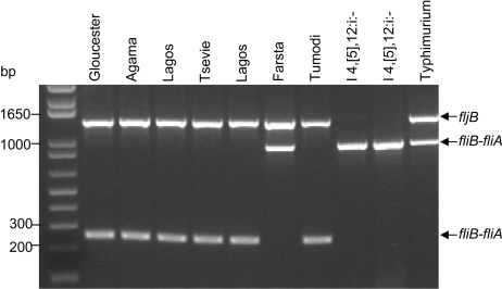 monophasic salmonella typhimurium Salmonella enterica subspecies enterica serovar 4,[5],12:i:- (s 4,[5]12:i:-) is believed to be a monophasic variant of s enterica serovar typhimurium (s typhimurium.
