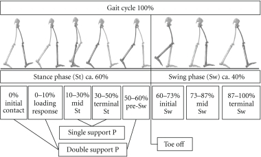Normal gait cycle with approximated event timings (modi   Open-i