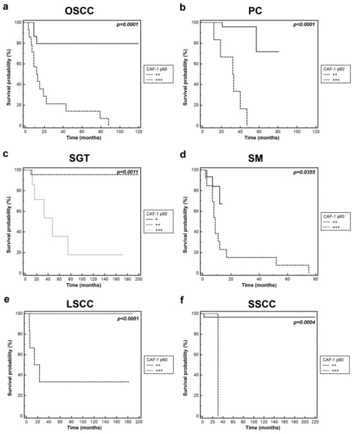 Kaplan-Meier plots showing disease free survival for OSCC, PC, SGT, SM, LSCC AND SSCC patients grouped by the level of expression of CAF-1 p60. Tumor samples were stratified in three categories (+, ++, and +++) based on intensity of CAF-1 p60 immunostaining. The comparison between survival curves and p value was determined by a two-sided log-rank test. (a) Oral squamous cell carcinoma (OSCC); (b) prostate cancer (PC); (c) salivary gland tumour (SGT); (d) skin melanoma (SM); (e) laryngeal squamous cell carcinoma (LSCC); (f) skin squamous cell carcinoma (SSCC).