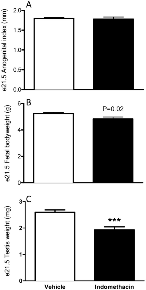Effects of maternal exposure to vehicle or indomethacin (0.8 mg/kg/day; e15.5–e18.5) on anogenital index (A), bodyweight (B) and testis weight (C) at e21.5.Values are means ± SEM for N = 7–45 from a minimum of three litters ***p<0.001 in comparison with respective control.