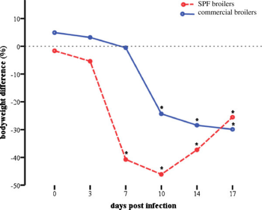 Graphical illustration of decreased weight gain. Difference of body weight (%) from experimentally infected specific-pathogen-free (SPFB) and commercial (CB) broilers to respective negative control groups at 0, 3, 7, 10, 14 and 17 days post infection. Asterisks indicate a significant difference from negative control group (P < 0.05).