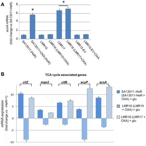 Quantitation of acnA mRNA (A) and TCA cycle-associated genes (B) by Real-Time RT-PCR.RNAs were prepared from SA13011-HeR/HoR, acnA- mutant LMR15 and LMR15 complemented with either the empty-vector (LMR15-EV) or wild-type acnA (LMR17), grown in the absence or presence of OXA (0.5 µg/ml). Cells were collected at exponential phase of growth as described in Materials and Methods. Relative fold change values versus SA13011-HeR ( = 1) of specific mRNAs are shown in the vertical axis; 16rRNA was used as an internal control. *, significantly different than SA13011-HeR (P<0.001).h.