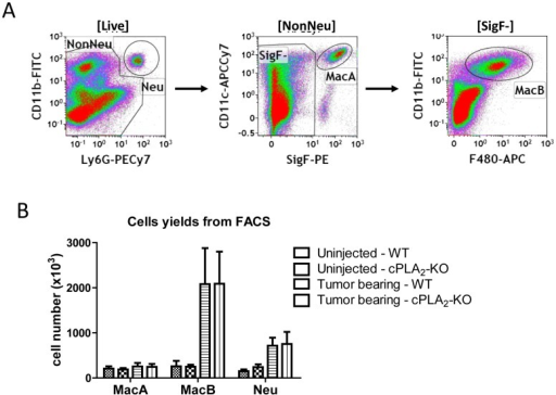 Recovery of inflammatory cells from TME by flow cytometry.LLC-Luc cells were injected into left lung lobes of WT or cPLA2-KO mice and tumor-bearing lungs were harvested 2.5 weeks later. Tissues from 4 mice were pooled, and inflammatory cells were recovered by flow cytometry. A. Sequential flow cytometry gating strategy used to recover inflammatory cells: Neu: neutrophils (CD11b+/Ly6G+), MacA macrophages (SigF+/CD11c+/Ly6G-) and MacB macrophages (F480+/CD11b+/Ly6G-/SigF-). B. Numbers of cells recovered by flow cytometry from uninjected or tumor-bearing left lung lobes of WT and cPLA2-KO mice. Data show average from 3 separate experiments, with each sorting performed on a pool of 4 mice. Error bars show S.E.M.