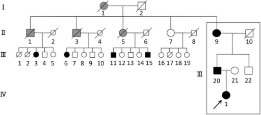 Pedigree of our patient's family. Members I-1, II-1, 3, 5 (gray) had complained of coxalgia during their lifetimes and are suspected of having had hip joint disease. Members II-9, III-3, 20 had been diagnosed with end-stage OA and member III-3, 20 had required total hip arthroplasty. Members III-6, 11, 15 had been diagnosed with AVN and required trochanteric osteotomy. The proband (IV-1) is indicated by the black arrow.