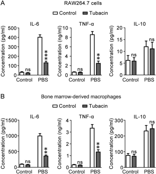 HDAC6 regulates LPS-induced M1 response.(A) RAW 264.7 cells pretreated with tubacin were stimulated with LPS (300 ng/ml) for 24 hours. The culture medium was then collected, and the concentrations of IL-6, TNF-α, and IL-10 were measured. (B) Primary BMMs pretreated with tubacin were stimulated with LPS (300 ng/ml) for 24 hours. The culture medium was then collected, and the concentrations of IL-6, TNF-α, and IL-10 were measured. ***, p<0.001; **, p<0.01; ns, not significant (p≥0.05).