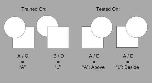 "An example of a possible training set and test phase exemplar. Imagine the participant was trained on A/C and B/D exemplars, where an ""left-key"" press was paired with A/C, and an ""right-key"" press was paired with B/D. If a participant were then shown an A/D exemplar during the test phase, then an ""left-key"" press would indicate that A/D was classified in the same way as an A/C exemplar, while a ""right-key"" press would indicate that it was classified in the same way as a B/D."