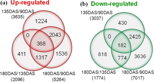 Venn diagram showing number of DEGs revealed by paired comparison (FDR≤0.001, /log2FC/≥1).The numbers of up- and down-regulated genes in comparisons of 135DAS/90DAS, 180DAS/135DAS/, and 180DAS/90DAS libraries. DEGs: Differentially expressed genes.