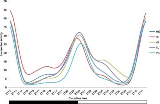 Geographic variation in locomotor activity among five AmericanD. melanogasterpopulations. The graph was obtained from the Eduction analysis of FaasX software. The white bar underneath the graph represents the photophase, the black bar the scotophase. The populations are Maine (ME; latitude: 44°37′N), Rhode Island (RI; 41°49′N), Virginia (VA; 37°32′N), Florida (FL, 30°20′N) and Panama City (PC; 8°58′N). The raw locomotor activity profiles are shown on Additional file 1: Figure S2.