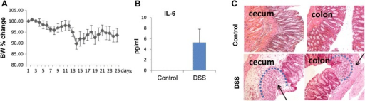Chronic intestinal inflammation in mice on day 29 after the beginning of DSS treatment. (A) Cumulative change of body weight (BW) in the course of dextran sodium sulfate (DSS) treatment from three independent experiments; n = 15 mice analyzed. (B) Serum IL-6 levels in control and DSS-treated mice (n = 8). (C) Immunohistochemical analysis of intestinal inflammation (H&E). Inflammation sites are marked by dotted lines. Cecum: Arrow points to the site of severe transmural inflammation with loss of entire crypts and endothelium and infiltration of inflammatory cells. Colon: Arrow points to severe submucosal inflammation with loss of crypts while the surface epithelium is still intact and to infiltration of inflammatory cells.