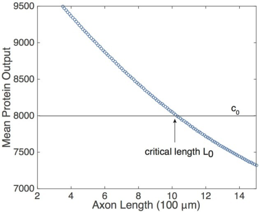 Relationship of the mean protein output  and axonal length L, obtained by time averaging the solution to Equation (5) for several values of τ. Function definitions and parameter values are as in Figures 2, 4. The existence of a threshold protein output c0 could provide a mechanism for determining a critical length L0.
