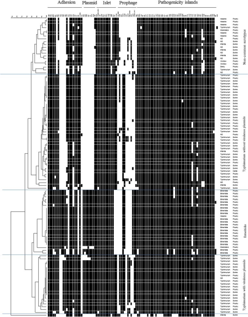 Virulence determinants microarrays data for 106 Salmonella strains analysed.At the top, the analysed genes are grouped according to their particular genomic location or function (fimbrial). The order of strains represents their relatedness according to the UPGMA dendrogram type performed in BioNumerics 5.1. The hybridization result of a distinct strain is shown by row. A white box indicates the absence and a black box indicates the presence of the target sequence in the strain.