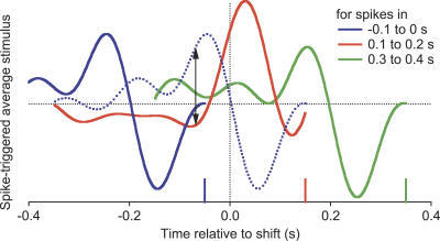 Dynamic Change of a Ganglion Cell's Visual MessageThe spike-triggered average stimulus of an On-Off cell, plotted for spikes (vertical tick marks) emitted in various 0.1-s intervals surrounding a peripheral shift. Each curve depicts the average intensity time course that caused a spike, and thus represents the average message such a spike sends to the brain. Dotted curve: the visual message that would have been conveyed by spikes in the interval 0.1–0.2 s, if the peripheral shift at 0 s had not occurred. Note that the dotted and solid curves for this interval differ significantly even at time points before the shift (arrows).