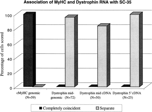 Frequency of association of muscle-specific RNAs with SC-35 defined domains.  MyHC and dystrophin RNA signals were scored  as coincident with, or completely separate from  SC-35 domains. Three different dystrophin  probes, midgenomic, mid-cDNA, and 5′ cDNA  were used. At least two investigators scored each  experiment. N = number of signals scored.