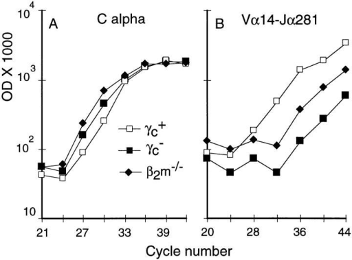 Vα14–Jα281 invariant α chain is absent from the liver of γc−  mice. Duplicates samples of 3 × 105 liver lymphocytes were obtained  from the indicated mice and processed as indicated in Fig. 1. It should be  noticed that the amount of Cα is lower in the γc+ preps. The differences  in Vα14–Jα281 amounts between γc+ and β2m−/− samples is at least  100-fold (5+3 cycles) and between γc+ and γc− at least 200-fold (7+2  cycles). Representative of three independent experiments.