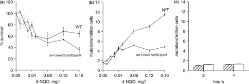 4-NQO increases mutation frequency in the rev1Δ rad30Δ rev3Δ pol4Δ strain. (a) wild-type and rev1Δ rad30Δ rev3Δ pol4Δ logarithmically growing in YPD were treated with increasing amounts of 4-NQO for 2 h and were after appropriate dilutions spread on YPD plates in triplicates to determine survival. (b) Yeast cells treated as in (a) were after appropriate dilutions spread on synthetic complete medium −arginine +L-canavanine to determine mutation frequencies in CAN1 gene by dividing the number of Can1r mutants by the average number of surviving cells (c) rev1Δ rad30Δ rev3Δ pol4Δ pGAL-RNR1 strain grown in YPRaf was divided into two cultures, one of which was induced by 2% galactose and mutation frequencies were determined after 2 and 4 h induction. Hatched bars: uninduced cells; open bars: galactose-induced cells.