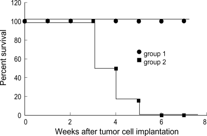 Induction of immune response in HSV-TK gene-transduced neuro-2a cells. 2×106 HSV-TK cells (Group 1) and 2×106 neuro-2a cells (Group 2) injected s.c. into the flank of the mice, respectively (N=6/group). One week after tumor cell challenge, the mice received intraperitoneally 50 mg/kg GCV twice a day for 7 days and then the animals were challenged by s.c. implantation of approximately 2×106 unmodified neuro-2a cells contralaterally to the original injection sites 14 days after the last GCV treatment. Log rank test showed group survived significantly compared with Group 2 (p<0.01).