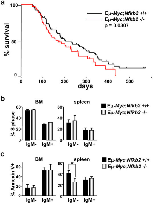 Nfkb2 loss accelerates Myc-induced lymphomagenesis by impairing apoptosis. a) Effects of Nfkb2 deficiency on Myc-induced lymphomagenesis. The survival of Eμ-Myc transgenic littermates of the indicated Nfkb2 genotypes is shown. The differences in the rates of tumor incidence between the Nfkb2+/+ and the Nfkb2-/- littermates is statistically significant (p = 0.0307). b) Eμ-Myc transgenic littermates of the indicated Nfkb2 genotypes were injected with BrdU, and cells from bone marrow and spleen were harvested 12 hr later. BrdU-incorporation was analyzed using an antibody-dependent fluorescence assay. The bars show the mean percentage of cells in S phase ± SEM (three independent experiments). c) The apoptotic index of the indicated genotypes was analyzed using an antibody dependent fluorescence assay. Annexin V+ B220+ cells of sIgM- or sIgM+ phenotype are shown. The bars represent the mean ± SEM from three independent experiments. * indicates p < 0.05.