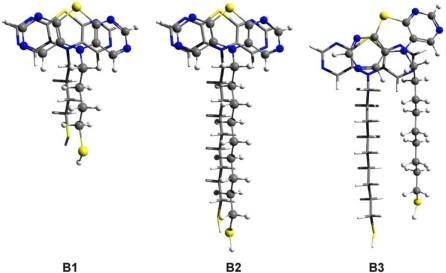 The optimized dimer geometries for thiol-butyl-DAPTZ (B1) and for two configurations of thiol-nonyl-DAPTZ (B2 and B3) obtained at SCC-DFTB level of theory.