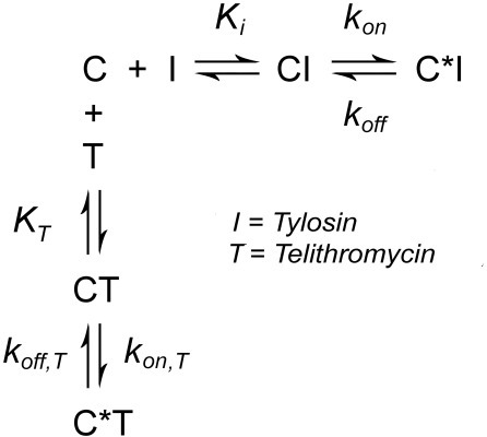 Competition between telithromycin (T) and tylosin (I) for binding to ribosomal complex C.
