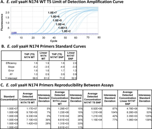 Comparison of amplification efficiency, reproducibility and limit of detecting Escherichia coli yaaH WT (N174) and SNP (N174T) genomic alleles by qPCR using allele-specific linear or THP primers. (A) A representative set of qPCR amplification curves generated by amplification of 107 to 102 wild-type E. coli genomes using the yaaH N174 WT-specific T5 THP primers. (B) Comparison of the amplification efficiencies of linear versus T5 THP primers specific for E. coli yaaH N174 WT or the N174T SNP genomic alleles. Standard curves were generated from triplicate qPCR amplifications of 107 to 102 copies of target genomes mixed with 107 copies of non-specific genomes. (C) Comparison of linear versus THP primer-based qPCR assay reproducibility. Absolute quantification of E. coli yaaH WT and N174T SNP genomic alleles from replicate assays using specific linear versus T5 THP primers is depicted. The lowest reproducibly detected template concentration is reported as the limit of detection for each primer.