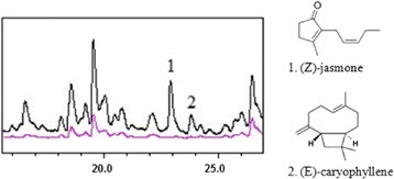 Comparative GC/MS chromatographs for unwounded (magenta line) and wounded leaves (black line). Indicated peaks 1 and 2 correspond to (Z)-jasmone and (E)-caryophyllene respectively