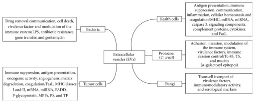 Schematic review of the origin function and markers (molecules to delivery) of EVs normal and tumor cells, parasites, fungi, and bacteria.