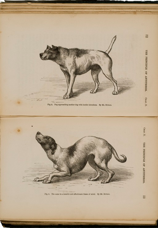 <p>Image of facing pages (p. 52-53) from The expression of the emotions in man and animals / by Charles Darwin. London : John Murray, 1872. P. 52 shows illustration of dog in hostile posture with hackles raised along the back. P. 53 shows illustration of dog in submissive pose, lowering head and body.</p>
