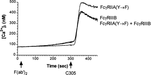 [Ca2+]i flux in cells expressing FcγRIIA containing the  ITAM mutation. Fura 2-AM preloaded J2Y→ F/3 cells were incubated with the mAbs IV.3 (anti-FcγRII) and 3G8 (anti-FcγRIII),  then analyzed by fluorimetry as described in Fig 2. The mAb  C305, specific for the TCR/CD3 complex, was added at 300 sec to  demonstrate that these cells are competent to flux [Ca2+]i.