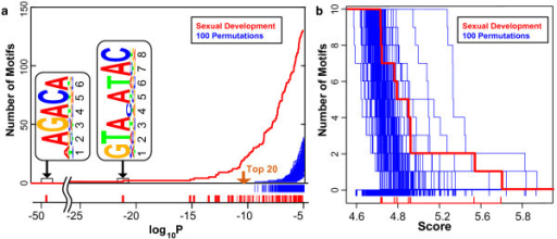 GEMS and MDScan random permutation analyses. a) log10P enrichment score distribution of motif candidates derived from GEMS analysis of the upstream regions of genes contained within Sexual Development cluster (GO:GNF0004) (red). For comparison, the log10P enrichment score distribution of motif candidates derived from GEMS analysis of 100 randomly selected sets of promoter sequences are also plotted (blue) representing the p-value range that is obtainable by chance, i.e. potential false positives. log10P values for the top 20 motifs from GEMS analysis of the Sexual Development cluster all fall below those obtainable by random simulations. b) MAP score distribution of motif candidates derived from MDScan analysis of the Sexual Development cluster (GO:GNF0004) (red). Again, for comparison, the MAP score distribution of motif candidates derived from MDScan analysis of 100 randomly selected sets of promoter sequences are also plotted (blue) representing the MAP score range that is obtainable by chance. MAP scores for motifs obtained using MDScan analysis of the Sexual Development cluster do not distance themselves from those obtained in random simulations suggesting the potential for many false positives in MDScan motif discovery.