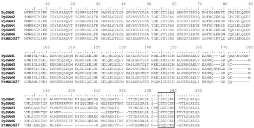 Alignment of predicted amino acid sequences of the MIKCC-type MADS-box genes of peach. Sequence comparison was obtained using Clustal X and utilized for tree estimation and ancestral reconstruction. Sequences included M, I, K and C domains. A poplar gene (PtMADS27) was included as outgroup.