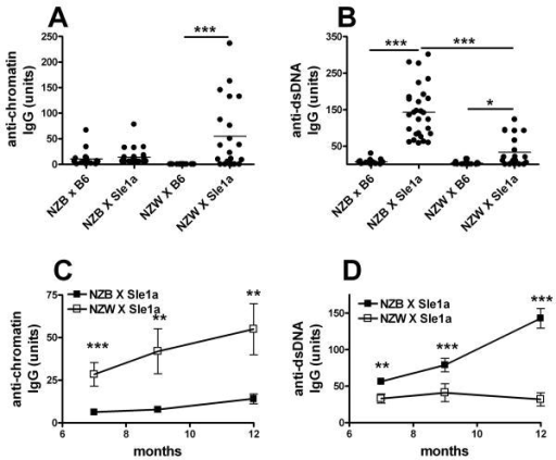 Sle1a expression increased autoAb production on NZB or NZW heterozygous genomes. Anti-chromatin (A) and anti-dsDNA (B) IgG in 12 month old mice. Time course production of anti-chromatin (C) and anti-dsDNA (D) IgG in (NZB X B6.Sle1a)F1 (black symbols) and (NZW × B6.Sle1a)F1 (white symbols). For E and F, means and standard errors are shown and statistical significance is indicated for t tests between the cohorts at each time point. *: p < 0.05; **: p < 0.01; ***: p < 0.001.