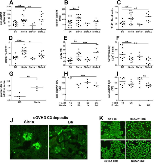 Sle1a or Sle1a.2 expression increased the cGVHD response. Anti-dsDNA IgG (A); spleen weight (B); ratio of AA4.1+ IgM+ CD21lo CD23lo T1 over AA4.1− IgM+ CD21int CD23+ follicular B cells; percentage of CD86+ (D) and CD22 expression (E) in B220+ gated cells; and ratio of CD62L+ CD44− naïve over CD62L− CD44+ memory CD4+ T cells five weeks after cGVHD induction in B6, B6.Sle1a and B6.Sle1a sub-congenic mice. G. Additive semi-quantitative scores of glomerular C3 and IgG deposits in B6.Sle1a and B6 mice five weeks after cGVHD induction. H. Anti-dsDNA IgG production in BM chimeras expressing Sle1a in both B and T cells (1a T + 1a B), in T cells only (1a T + B6 B), in B cells only (B6 T + 1a B), or in neither B nor T cells (B6 T + B6 B) one week after cGVHD induction. I. Anti-dsDNA IgG production in BM chimeras grouped according to the Sle1a or B6 origin of their T cells (1a T or B6 T), or B cells (1a B or B6 B). *: p < 0.05; **: p < 0.01; ***: p < 0.001. J. Representative C3 immunofluorescence staining in B6.Sle1a and B6 mice five weeks after cGVHD induction (100x). K. Representative ANA stain and corresponding titer in 9–12 month old mice.