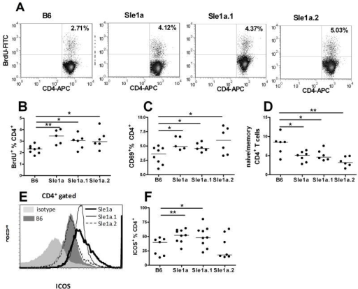 Both Sle1a.1 and Sle1a.2 induced a higher spontaneous proliferation and activation in CD4+ T cells, but only Sle1a.1 was associated with higher ICOS expression. A–B.In vivo BrdU incorporation shown in representative FACS plots and their quantitation. C. CD69 expression. D. CD44lo CD62L+ naïve/CD44hi CD62L− memory CD4+ ratio. E. ICOS expression. A–C shows 2–3 month old mice and D–E 8–12 month-old mice. *: p < 0.05; **: p < 0.01.