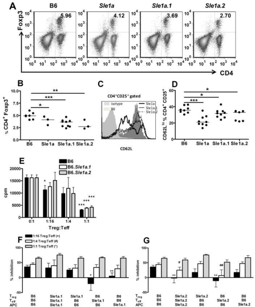 Both Sle1a.1 and Sle1a.2 decreased in vitro Treg suppression. A–B. Representative FACS plots and quantitation of CD4+ Foxp3+ splenocytes. C–D. Representative histograms of CD62L staining in CD4+ CD25+ gated splenocytes and corresponding quantitation. The light gray filled histogram shows the isotype control, the dark gray filled histogram shows B6, while thick, thin and dashed black lines represent B6.Sle1a, B6.Sle1a.1 and B6.Sle1a.2, respectively. E. B6 (black), Sle1a.1 (white) and Sle1a.2 (grey) Treg suppression of B6 Teff proliferation at the indicated ratios in the presence of B6 APCs. For each strain, proliferation in the presence of Treg at various ratios was compared to proliferation in the absence of Tregs. Sle1a.1 (F) or Sle1a.2 (G) expression in Tregs, Teffs, or APCs affects the extent of the inhibition of Teff proliferation. The inhibition of Teff proliferation in presence of 1:1, 1:4, or 1:16 Treg:Teff ratios is expressed as a percentage of the proliferation induced in the absence of Tregs for each condition. Data were collected from 5–7 month old mice. E–G graphs are representative of 2 independent assays each with 3–4 mice per strain. All comparisons were performed with B6 values. *: p<0.05, **: p<0.01, ***: p<0.001.