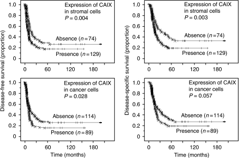 Kaplan–Meier survival curves showing the comparison of disease-free survival between high and low expression of CAIX (P-values obtained from log-rank test) (left columns). Kaplan–Meier survival curves showing the comparison of disease-specific survival between high and low expression of CAIX (P-values obtained from log-rank test) (right columns).