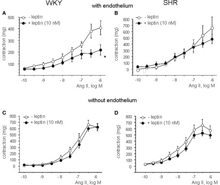 Effect of leptin on angiotensin II (Ang II)-induced contractions in aortic rings from WKY (A) and SHR (B). Effect of endothelial denudation on angiotensin II (Ang II)-induced contractions in aortic rings from WKY (C) and SHR (D) in absence and presence of leptin. Data are shown in milligram as mean ± SEM of 10 animals per strain.