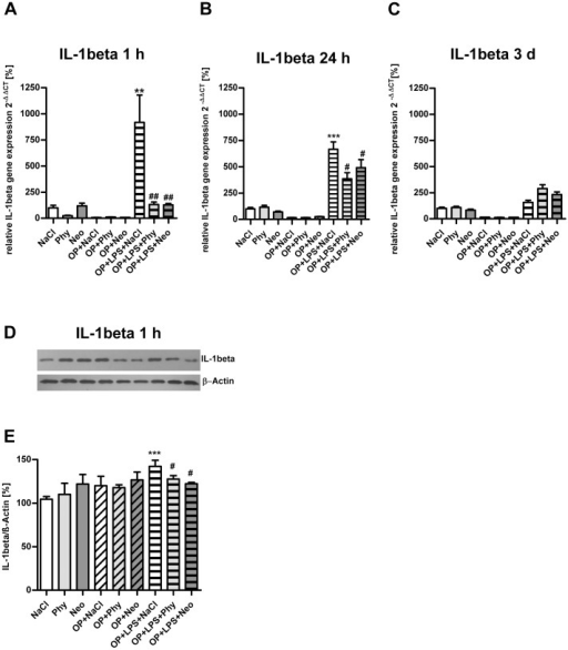 Physostigmine and neostigmine reduce surgery combined with LPS-induced IL-1beta expression in the cortex.IL-1beta expression was measured by quantitative Real-Time PCR in cortex samples extracted 1, 24, and 72 h postintervention (A–C). Also, IL-1beta expression was detected by western blot analysis in cortex samples extracted 1 h postintervention (D–E). Surgery combined with LPS-treatment resulted in an increased gene expression of IL-1beta after 1 and 24 h, which was decreased by physostigmine and neostigmine administration. Results of Real-Time PCR quantification are shown as mean ± SEM (n = 8 per group). Data are normalized to levels of saline treated rats (Control = 100%; bars represent mean ± SEM, n = 8 per group). Blots are representative of a series of three blots. The densitometric data represent the ratio of the IL-1beta band to the corresponding β-actin band density. ***P<0.001 and **P<0.01 represent the difference between LPS and saline treated groups. ##P<0.01 and #P<0.05 represent the difference between LPS and physostigmine or neostigmine treated groups.