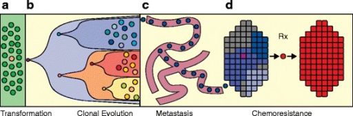 Single-cell processes in cancer. Although single cancer cells interact with their neighbors and the adjacent stromal cells, there are many biological processes that occur through the actions of individual cancer cells, shown in this illustration. These complex biological processes in human cancers include: (a) transformation from a single normal somatic cell into a tumor cell; (b) clonal evolution that occurs through a series of selective sweeps when single cells acquire driver mutations and diversify, leading to intratumor heterogeneity; (c) single cells from the primary tumor intravasate into the circulatory system and extravasate at distant organ sites to form metastatic tumors; and (d) the evolution of chemoresistance that occurs when the tumor is eradicated but survived by single tumor cells that harbor resistance mutations and expand to reconstitute the tumor mass.