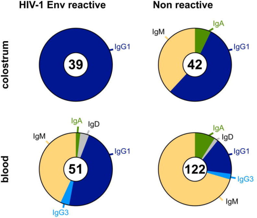 HIV-1 Env-reactive monoclonal antibodies isolated from colostrum are IgG1 isotypeThe isotype distribution of HIV-1 Env-reactive (left) and nonreactive (right) antibodies isolated from colostrum (top) and blood (bottom) of chronically HIV-1-infected, lactating women is shown by color. The number of antibodies in each population is indicated in the center of each donut.