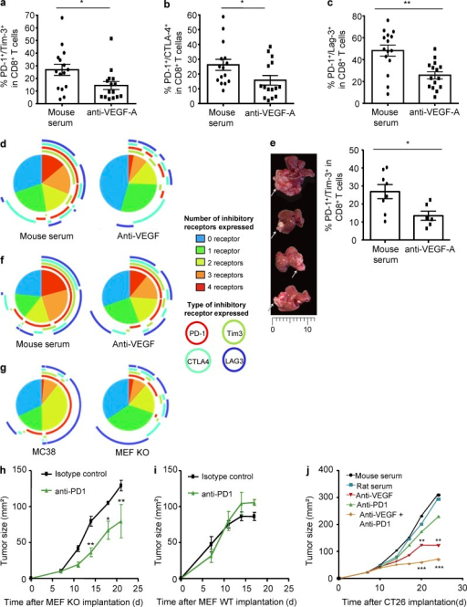 VEGF-A neutralization decreases expression of inhibitory receptors involved in exhaustion on CD8+ T cells in heterotopic and orthotopic mouse tumor models. Mice bearing subcutaneous CT26 tumors were treated with anti–VEGF-A antibody or mouse serum (as a control). Co-expressions of PD-1/Tim-3 (a), PD-1/CTLA-4 (b), or PD-1/Lag-3 (c) on intratumoral CD8+ T cells have been analyzed. 3 pooled experiments are shown with 5 mice/group. *, P < 0.05; **, P < 0.01. (d) Co-expression of PD-1, Tim-3, CTLA-4, and Lag-3 has been determined on intratumoral CD8+ T cells after 14 d of anti-VEGFA treatment (day 22). (e) Anti–VEGF-A was given to mice bearing CT26 hepatic metastases. Representative pictures of hepatic metastases (left panel) and the percentages of intratumoral CD8+ T cells expressing PD-1/Tim-3 (right panel) were shown. Two pooled experiments are shown with 3–4 mice/group. *, P < 0.05 (f). Same experimental setting as in d, but on CT26 hepatic metastases. (g) Co-expression of inhibitory receptors on CD8+ T from MC38 and MEF KO tumors. (h–i) VEGF-KO MEF (h) and wild-type MEF tumor-bearing mice (i) were treated with anti–PD-1 alone twice a week starting at day 7. (j) CT26 tumor-bearing mice were treated with anti-VEGFA or anti–PD-1 alone or both. Tumor growth was monitored twice a week. One representative experiment out of three is shown, with five mice per group. *, P < 0.05; **, P < 0.01; ***, P < 0.001.