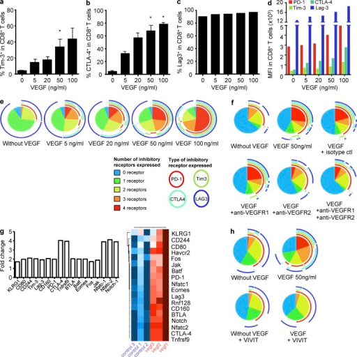 VEGF-A enhances co-expression of inhibitory receptors involved in CD8+ T cell exhaustion in a VEGF-R2 and NFAT-dependent manner. Percentages of Tim-3 (a), CTLA-4 (b), and Lag-3 (c) expression on purified CD8+ T cells after 48 h of culture with plate-bound anti-CD3 (10 µg/ml) and various doses of VEGF-A. Histograms represent means ± SEM of 3 pooled experiments. (d) Same experimental settings as in (a) but mean fluorescence intensity (MFI) is shown. (e) The simultaneous expression of inhibitory receptors (PD-1, Tim-3, CTLA-4, and Lag-3) was examined on stimulated CD8+ T cells. (f) Same experimental setting as in (e) but in the presence of anti-VEGF-R1 or -R2 antibodies. (g) Transcriptional analyses of gene products linked to T cell exhaustion and VEGF-R2 signaling in CD8+ T cells stimulated or not with VEGF-A using a microfluidic card designed for qRT-PCR (TaqMan Low Density Mouse Immune Array from Applied Biosystems). Graph represents log fold changes (relative to nontreated controls, calculated with the ΔΔCT method (normalization with RNA18s as endogenous control) of transcripts. (h) Same experimental setting as in (e) in the presence of 11R-VIVIT. For simultaneous expression of inhibitory receptors, one representative experiment out of three is shown. *, P < 0.05.