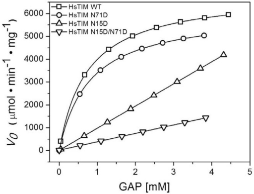 The N15D mutation strongly affects the activity of HsTIM.Initial velocity data were collected in reaction media containing 100 mM triethanolamine/10 mM EDTA pH 7.4, 0.2 mM NADH, 5 unit of GDH and the GAP concentrations indicated in the abscissa. The reaction was initiated by addition of 5 ng/mL of WT or N71D HsTIM, 60 ng/mL of N15D or 80 ng/mL of N15D/ N71D. For the WT and N71D mutant, lines represent the fit to the Michaelis-Menten equation. The data could not to be fitted for the N15D and N15D/N71D mutants; hence, kinetic constants were not obtained. The experiment is representative of independent triplicate assays; the difference in the calculated kinetic constants was less than 5%.