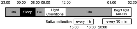 Time schedule. The subjects were exposed to different light conditions (<10, 100, 300, 900 and 2700 lx) from 09:00 to 12:00 and to bright light (300 lx) from 01:00 to 02:30
