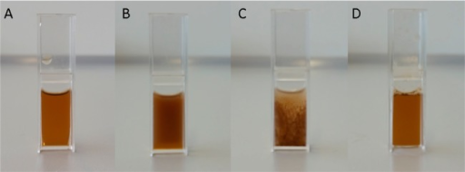 Magnetic actuation of iron oxide PNIPAM nanoparticles(grafting-to, core 10.7 nm/PNIPAM 20 kDa), dissolved in water (5 mg/mL),(A) clear dispersion before magnetic actuation, solution temperature24 °C, (B) aggregation and turbidity after 5 min actuation, solutiontemperature 32.4 °C, (C) precipitation after 10 min actuation,solution temperature 35.7 °C, (D) redispersion of aggregatedparticles after cooling down to below the LCST.