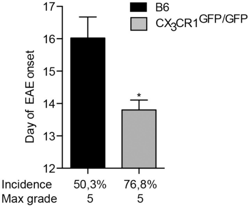 CX3CR1-deficient mice are more susceptible to EAE. CX3CR1gfp/gfp and B6 mice were immunized with (MOG)p35–55 and monitored daily for development of EAE. The data shows significantly earlier onset, higher incidence of EAE in CX3CR1-deficient mice than in B6 mice. Data are presented as means ± SEM of at least four individual experiments (n ≥ 4), *P < 0.05.