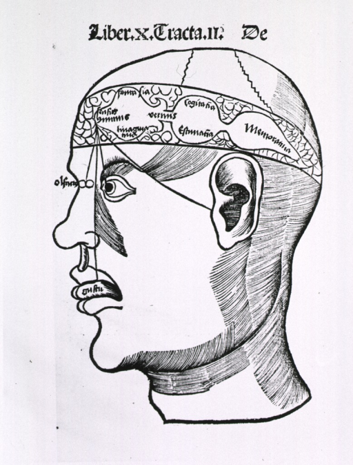 <p>Human head with lines connecting the senses of taste, hearing, sight, and smell to areas of the brain.</p>