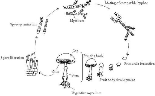 Figure 1 Antiinflammatory And Immunomodulating Properties