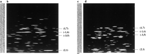 (a) An electron micrograph of an ice-embedded actin filament that was included in the average data set. (b) Computed electron diffraction pattern of the filament shown in a. (c) An electron micrograph of an ice-embedded actin filament decorated with N375  that was included in the average data set. (d) Computed electron diffraction pattern of the filament shown in c. The location of the strong  layer lines are indicated by arrows. Bar, 100 Å.